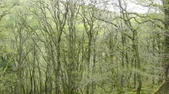 7 where I heard wood warbler